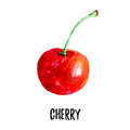 Cherry illustration. Hand drawn watercolor on white background.