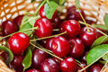 Cherry, joy for the eyes and delight to mouths. Royalty Free Stock Photo