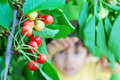 Cherry and kid Royalty Free Stock Photo