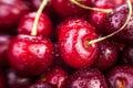Cherry Macro