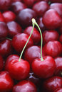 Cherry pair of close up Stock Photography