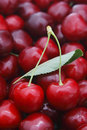 Cherry pair of close up Stock Images