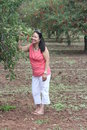 Cherry picking pretty lady beside a tree in a small orchard holding a branch full of cherries Stock Photos