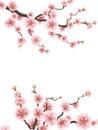 Cherry or sakura floral frame. EPS 10