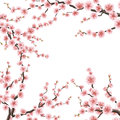 Cherry sakura flowers template. EPS 10