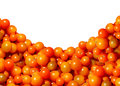 Cherry Tomato Border Design Stock Photography