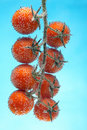 Cherry tomato in bubbles Stock Images