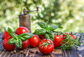 Cherry tomatoes basil pepper and pepper mill on wooden board Royalty Free Stock Photography