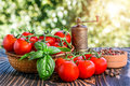 Cherry tomatoes basil pepper and pepper mill on wooden board Royalty Free Stock Image