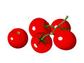 Cherry tomatoes branch of red isolated on a white background Royalty Free Stock Photos