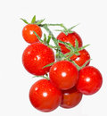 Cherry tomatoes on a branch in the water droplets Royalty Free Stock Images
