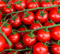 Cherry tomatoes close-up Royalty Free Stock Photo