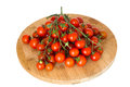 Cherry tomatoes fresco maturo sul ramo Immagine Stock
