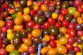Cherry tomatoes fresh different kinds of Royalty Free Stock Photography