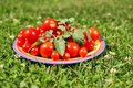 Cherry tomatoes small plate in green grass Royalty Free Stock Photography