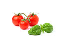 Cherry tomatoes with a sprig of Basil. Royalty Free Stock Photo