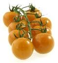 Cherry tomatoes on vine. Royalty Free Stock Photo