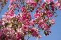 Cherry tree Stock Foto's
