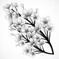 Cherry tree blossom. Vintage black and white hand drawn vector illustration in sketch style. Royalty Free Stock Photo