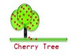 Cherry tree green growing ripe red cherries Royalty Free Stock Photography