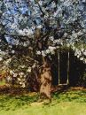 Cherry tree whith a swing. Stock Photo