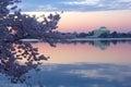Cherry trees in blossom around Tidal Basin, Washington DC Royalty Free Stock Photo