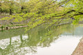 Cherry trees and the reflection on the water. Royalty Free Stock Photo