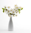 Cherry twig in vase Royalty Free Stock Photo