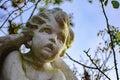 Cherub angel face Royalty Free Stock Photo