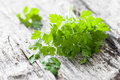 Chervil Royalty Free Stock Photo