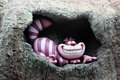 Cheshire Cat, Disneyland.
