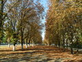 Chestnut alley in the aunumn city ukraine poltava Royalty Free Stock Photos