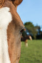 Chestnut arab horse eye a closeup of a s with another in the background Royalty Free Stock Photo