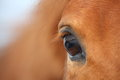 Chestnut horse eye Royalty Free Stock Images