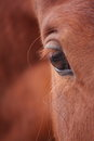 Chestnut horse eye close up Royalty Free Stock Photo