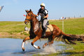 Chestnut horse galloping through water jump Royalty Free Stock Photo