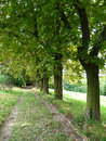 Chestnut lined avenue a is going to a forest Royalty Free Stock Images