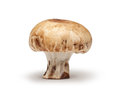 Chestnut Mushroom Royalty Free Stock Photo