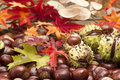 Chestnuts and autumn leaves Royalty Free Stock Photos