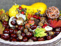 Chestnuts basket pupkins and autumn fruits in the Stock Photo