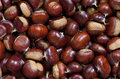 Chestnuts detail of autumn background Royalty Free Stock Image