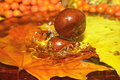 Chestnuts dropped to water. Royalty Free Stock Images