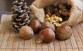 Chestnuts nuts and cones in rope sac Stock Photo