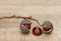 Chestnuts open on branch on wood Royalty Free Stock Photos