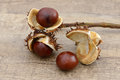Chestnuts open on branch on wood Stock Photo