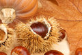 Chestnuts and pumpkin autumn still life with on a wooden background Stock Images