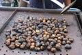 Chestnuts seasonal fruit farming Emilia Romagna Italy