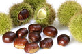 Chestnuts on the white background Stock Photos