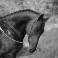 Cheval Photographie stock
