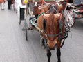 Cheval et chariot de Brown Photo stock